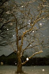 Backyard Tree in Winter
