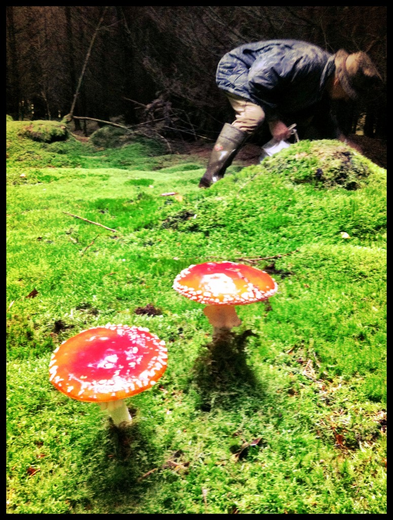 Wild Mushroom Forest
